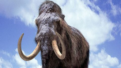 Video of 'Woolly Mammoth' Surfaces