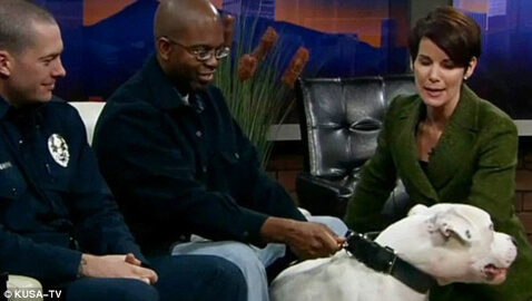 News Anchor Bitten On Live Show By Dog
