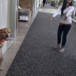 Miracle Dog with Two Legs Learns to Walk