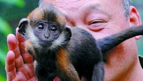 Chinese Zoo Keeper Saves Monkey by Licking It