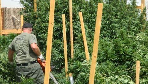 Sheriff's Deputy Arrests Abdul Jamar for Marijuana Again
