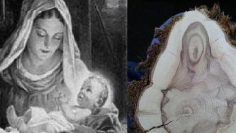 Virgin Mary Seen in Tree Trunk
