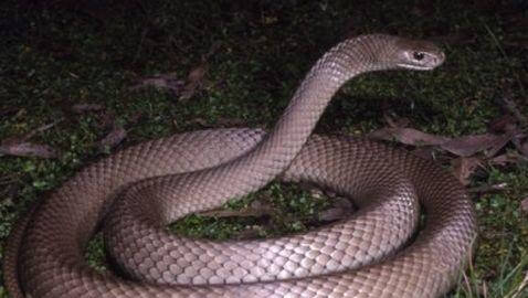 Daughter Saved by Mom from Snake in Australia
