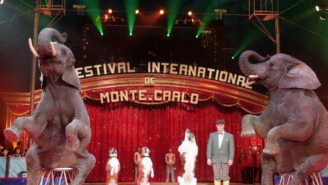 $9.3 Million Settlement in Circus Elephant Case