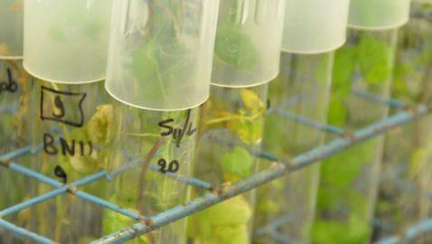 Inter-American Court of Human Rights Defeats Costa Rica Ban on In-Vitro Fertilization