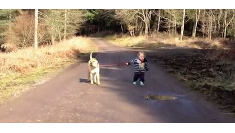 VIDEO: Adorable Toddler Stomps in Mud Puddle as His Dog Patiently Waits