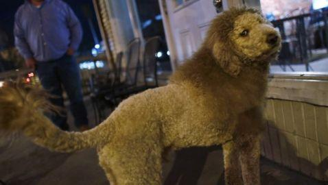 Lion Sightings in Virginia Cause Stir; Turns Out to be a Dog