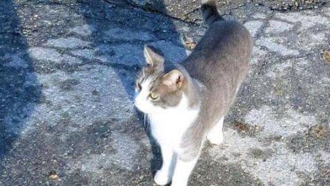 Italian Cat Stays Loyal to Deceased Owner