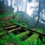 old-railroad-tracks-in-forest