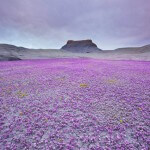 purple-sea-badlands-utah