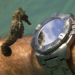 seahorse-divers-watch