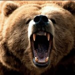 Man Shoots Bear in his Backyard only to be Mauled by a Series of Charges from Police
