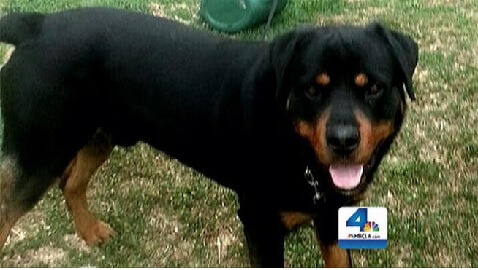 Police Shoot Rottweiler While Arresting Its Owner