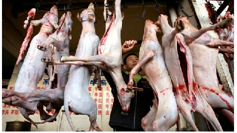 Supply & Demand: Lucrative Black Market for Dog Meat in Vietnam Perpetuates Pet Trafficking