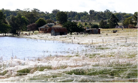 Australian Landscape Covered by Millions of Spider Webs After Flood