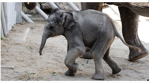 Elephant Population in Danger