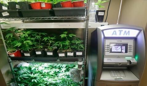 Future Marijuana Banking Regulations