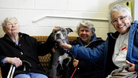 Group of Nuns Adopt Pit Bull