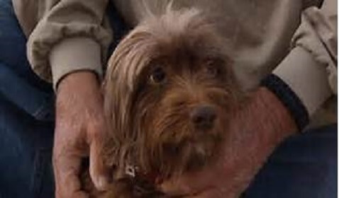 Lost Dog Rescued 2 Miles Off Shore Reported Missing for 2 Years