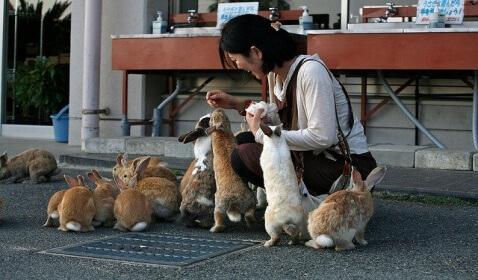 """Okunoshima, Otherwise Known as """"Rabbit Island"""""""