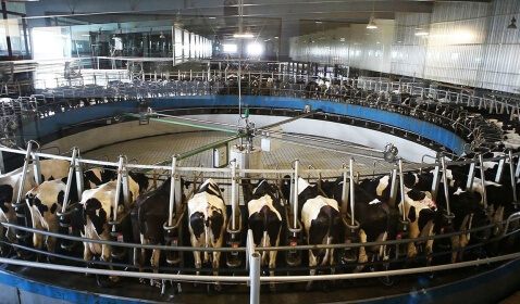 Demand for U.S. Dairy Products Remains Strong