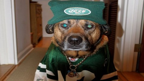 Dogs of New York React to Jets Signing Michael Vick