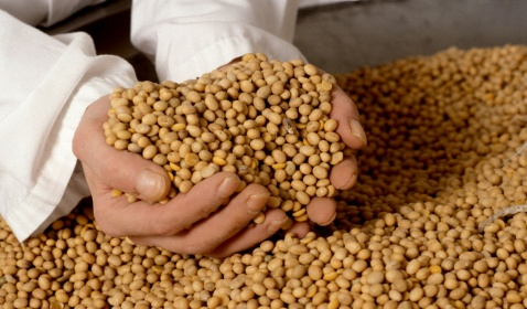 """U.S. Soybean Supply """"Near Critically Low"""""""