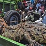 One-Ton Crocodile Caught in Uganda