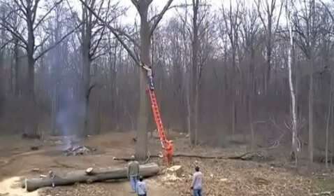 Falling Branch Knocks Man off Ladder