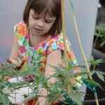 Six-Year-Old Girl Suffering from Pediatric Epilepsy Saved by Marijuana