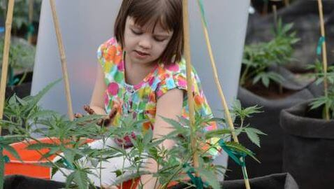 Little Girl Named Charlotte Saved by Marijuana