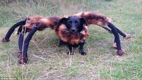 Man Terrifies Innocent Citizens with Spider-Dog