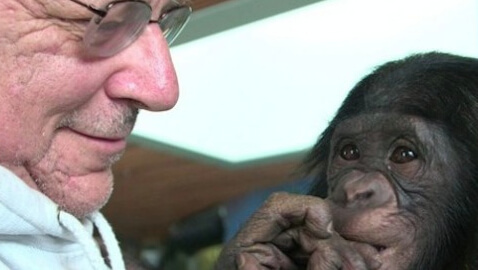 "Attorney Fighting for ""Legal Personhood"" for Chimpanzees"