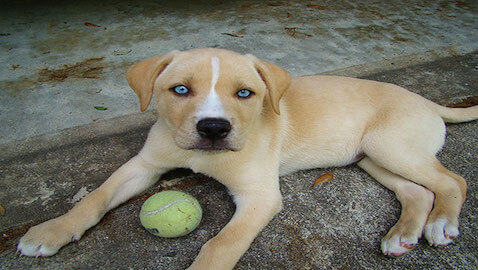 The 15 Most Adorable Mixed Breed Dogs