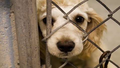 FBI Creates New Felony Category for Animal Cruelty