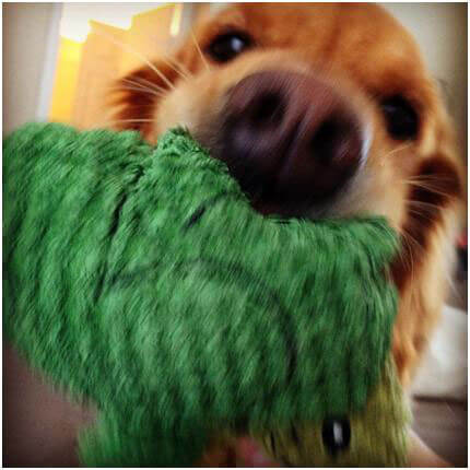 Turtle-Toy-Time!