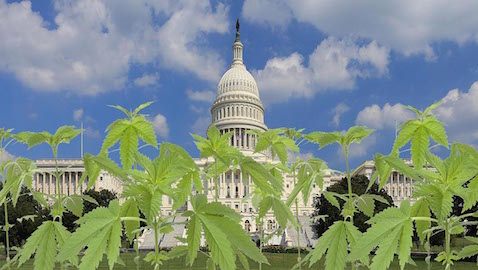 Since Congress has blocked Washington, D.C. from enacting certain laws about marijuana legislation, it is unclear how legalization laws will be enforced.