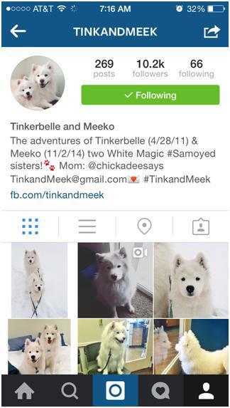 Cute-animal-instagram-3