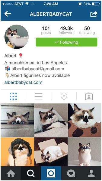 Cute-animal-instagram-5