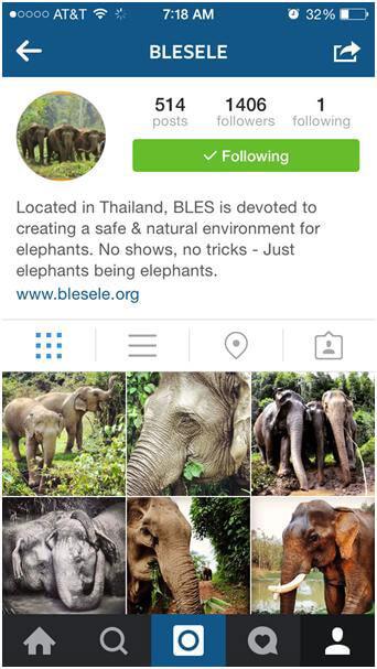 Cute-animal-instagram-6