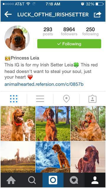 Cute-animal-instagram-7