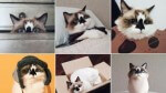 Love Animals? You'll Love These 9 Adorable Animal Instagram Accounts