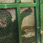 Two Chimpanzees Given the Right for Writ of Habeas Corpus as Legal Persons