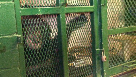 Nonhuman Rights Project frees chimpanzees