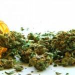 Medical Marijuana Treatments Now Allowed in Georgia
