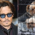 Johnny Depp Threatened with 10 Years Prison for Smuggling Dogs