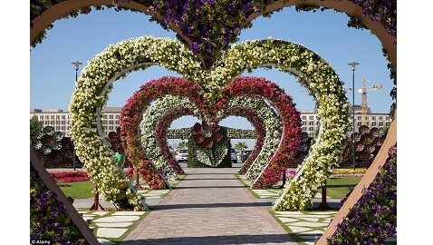 Why You Should Visit the Dubai Miracle Garden