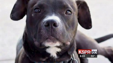 Missouri Police Chief Who Shot Family's Puppy Resigns