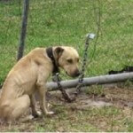 Missouri Law Prohibits Dog Tethering for More than 30 Minutes