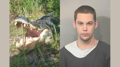 Florida Burglar Meets His End in the Stomach of a Huge Alligator